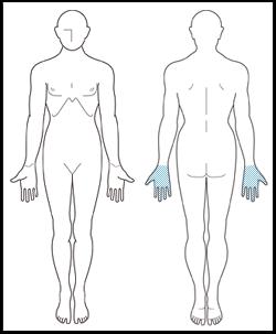 両手の指、両手の甲 イメージ
